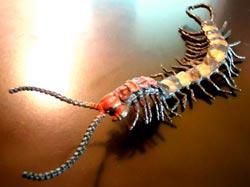 insetto ripugnante